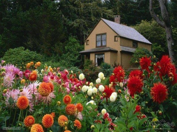 Цветники на даче фото