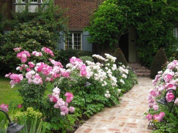 Цветы в саду фотогалерея