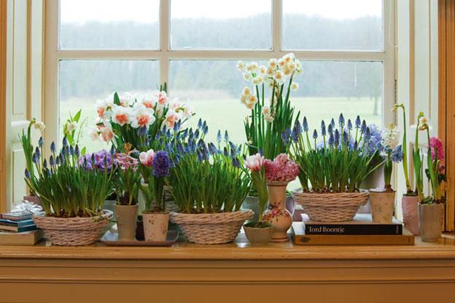 Цветок в домашних условиях