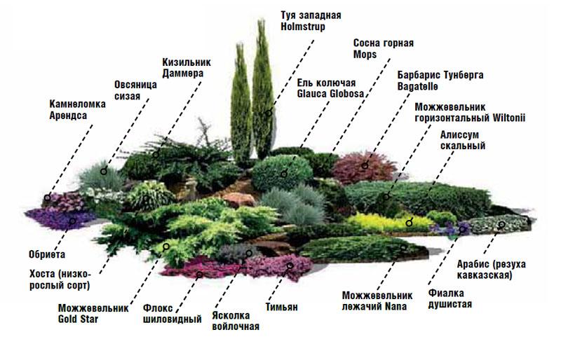 площадку с растениями,