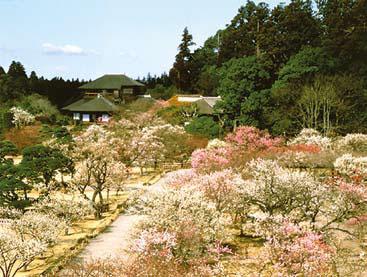 Ландшафтная соционика выбери сад – и