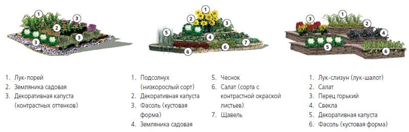 Регулярная планировка огорода