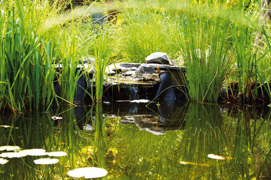 Растение в прибережной зоне пруда (Фото: Д. Шишкин)