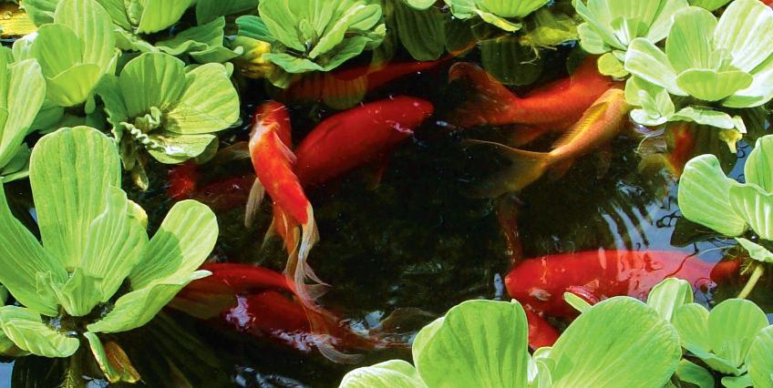 как сделать пруд с рыбой
